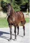 Medipetfood Pancreas/Paard 1000 gram