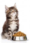 Kibbles Basic 6-Mix Kat 10 kg